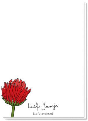 Achterkant bloemenkaart met daarop een Gerbera in de knop, verder blanco
