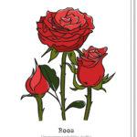 Voorkant bloemenkaart met daarop 3 rozen, waarvan 1 in de knop. Met daaronder de betekenis van de roos 'Onvoorwaardelijk liefde'